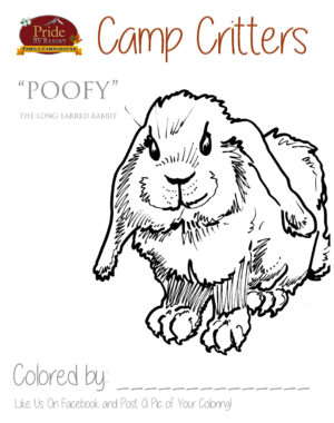 camp-critters-color-puffy-rabbit